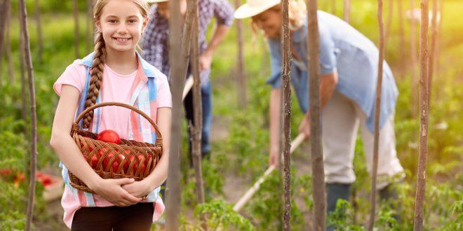 Ready, Set, Grow: Heirloom Tomatoes