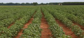 Row Crops Short Course Set for December