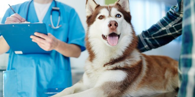 Pet Health Vaccinations: Also Important for Humans