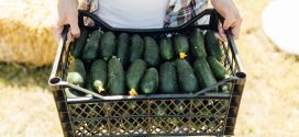 Charitable Donations Are Option for Produce Growers