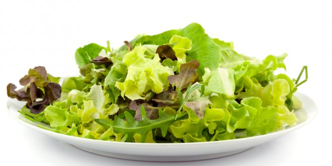 Lettuce Varieties: What Are You Adding to Your Plate?