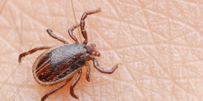 Beware of Ticks this Summer