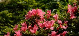 Dwarf Shrubs in Landscapes