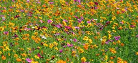 Grow a Wildflower Meadow in Your Backyard