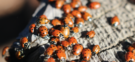 Insect Pests Want 'In'