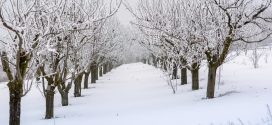 cold weather fruit trees