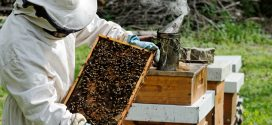 24th Annual Beekeeping Symposium Set for Feb. 2