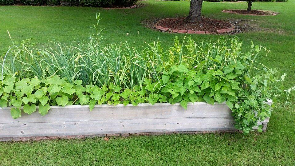 "Harvest for Health""—Healing Gardens for Cancer Survivors - Extension ..."