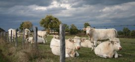 Livestock Safety and Care After Storms