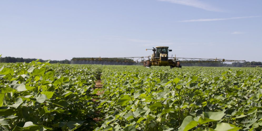 Burndown Herbicides Affected by Low Temperatures