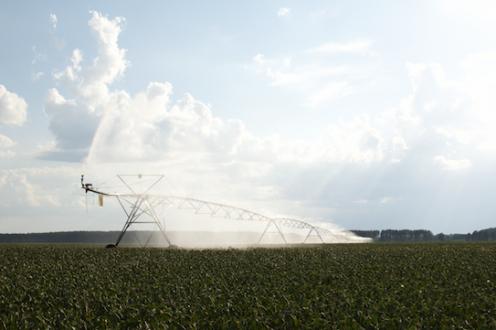 crop budgets