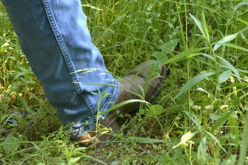 Stepping into an area of tall grass.
