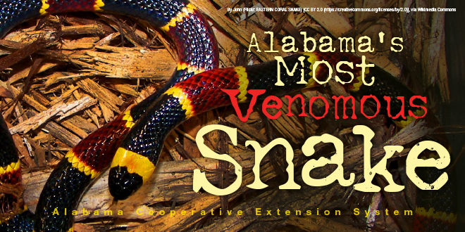 Alabama's Most Venomous Snake