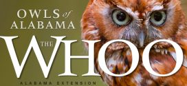 The Whoo: Owls of Alabama