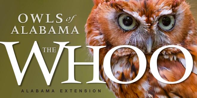 The Whoo: Owls of Alabama