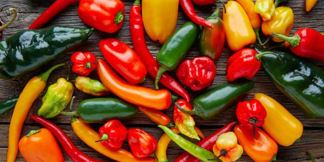 Sweet and Hot Peppers Popular in Home Gardens