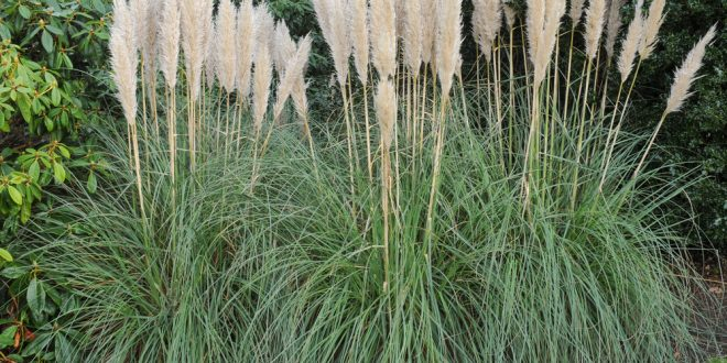 Ornamental Grasses Can Add Beauty to Your Landscape