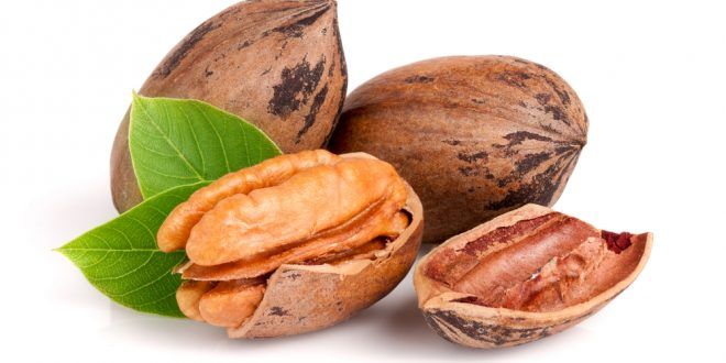 Helpful Tips for Gathering and Storing Pecans