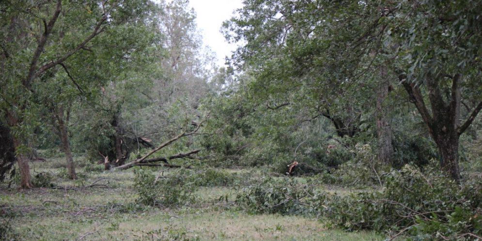 Storm Hits Alabama Pecan Crops