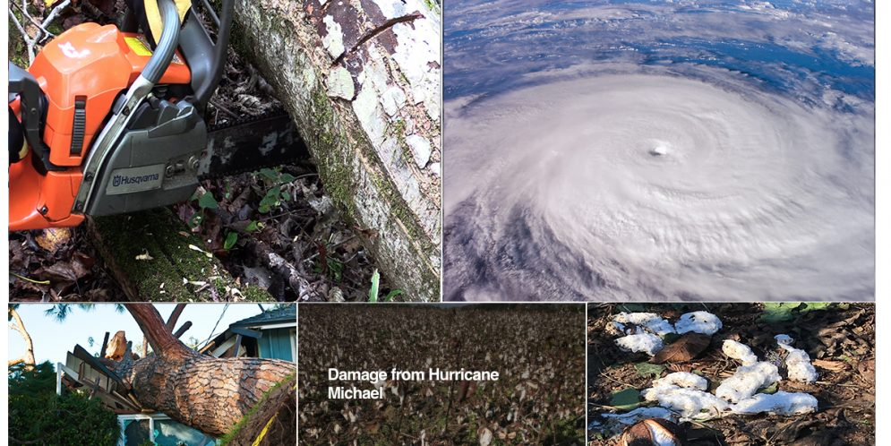Alabama Extension Launches Hurricane Recovery Website