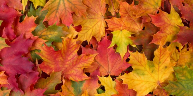 Vibrantly-colored Leaves Are Falling
