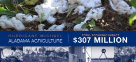 Agriculture Damage Ripples Through Wiregrass Economy