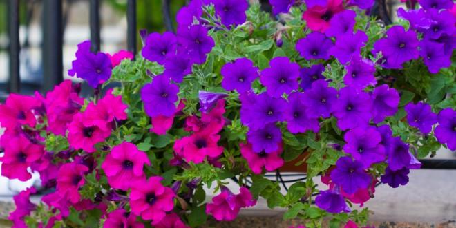 Spring flower garden guide extension daily spring flower garden guide mightylinksfo