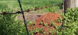Protect Pastures from Fire Ants