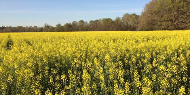 Extension to Host Crop Production Meetings across Central Alabama