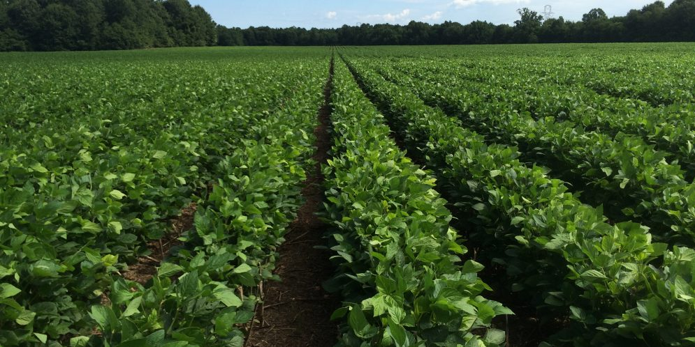 Trade Tariffs Initiate Soybean Market Shift, Cause Concern