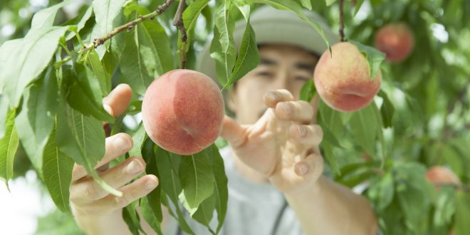 Going Beyond: Additional Markets for Fruit and Vegetable Producers