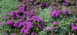 Ground Covers: Beneficial To Landscapes
