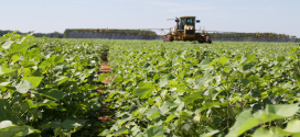 Auxin Herbicide Trainings Scheduled Throughout the State