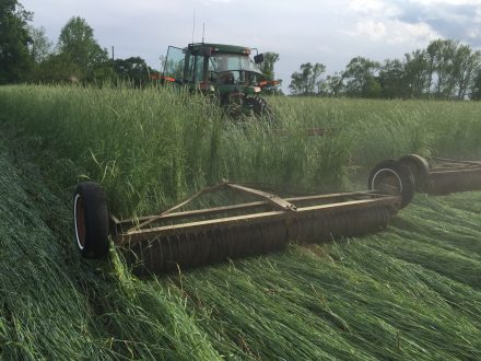 cover crops field day