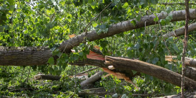 Exercise Caution During Clean Up After Hurricane Michael