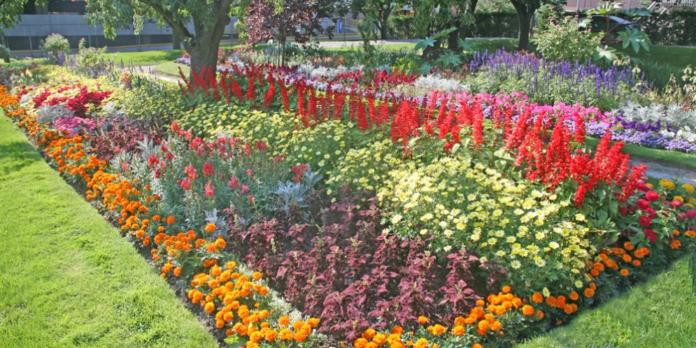 Annual Flower Beds Add Excitement to Home Landscape