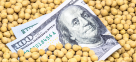 shutterstock.com/Alf Rebeiro. soybeans and a $100 bill.