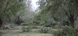 Pecan orchard damage in Houston County, Alabama.