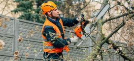 Chainsaw Safety Critical Part of Storm Clean Up