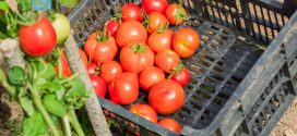 Cost-Share Program: Assistance for Food Safety Certifications